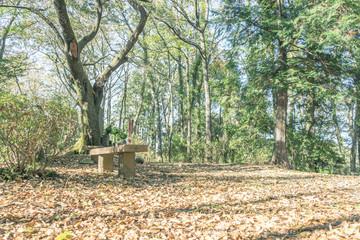 Scenery with the bench / Shuzenji Bairin Promenade