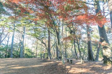 Scenery with the bench / Shuzenji Nature Park