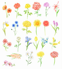 Watercolor flowers set. Beautiful fresh flowers on white background. Rose, tulip and more. Vintage art for decoration.