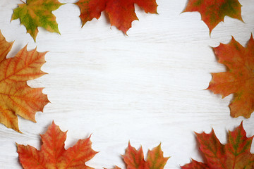 time autumn pattern/ flat lay of maple leaves folded in the form of top view the frame