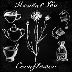 Cornflower hand drawn sketch botanical illustration