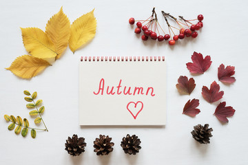 Attributes of autumn and notebook on a white board
