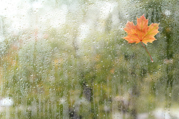 rainy autumn weather outside/ small maple leaf has stuck to the window with a wet rain