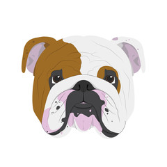 English Bulldog dog isolated on white background vector illustration