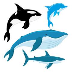 Killer whale, dolphin, whale, shark.