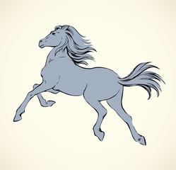Prancing horse. Vepktorny drawing