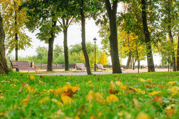 Autumn view of park with green grass and yellow leaves