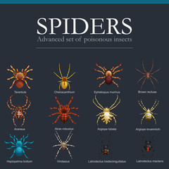 Spiders cartoon set, dangerous insects collection