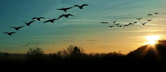 Migracja ptaków o zachodzie słońca