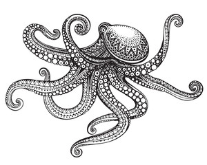 Hand drawn octopus in graphic ornate style.