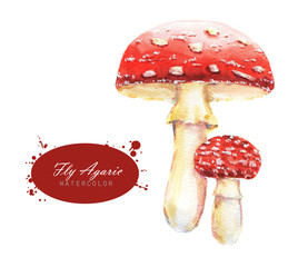 Hand-drawn watercolor illustrations of the fly agaric. Botanical mushrooms drawing isolated on the white background.