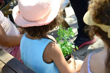 Planting green herbs in workshop