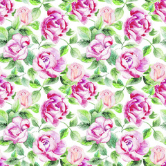 roses in the summer garden, pattern, watercolor