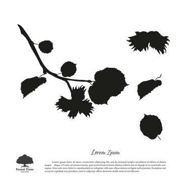 Black silhouette of branches of hazelnuts on a white background.