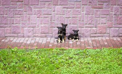 three dogs on the street