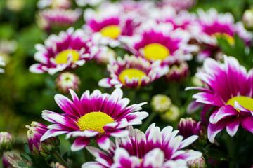Beautiful flowers garden close up background.
