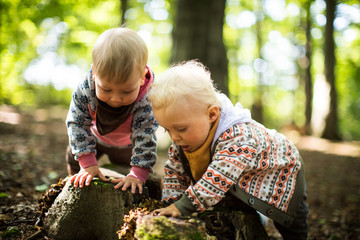 den Baumstamm untersuchen