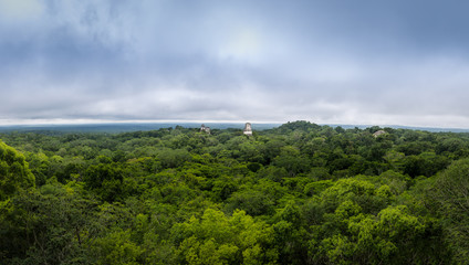 Panoramic view of rainforest and top of mayan temples at Tikal National Park - Guatemala