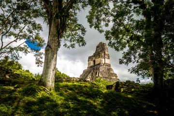 Top of mayan Temple I (Gran Jaguar) at Tikal National Park - Guatemala