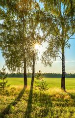 summer rural landscape with sunrise