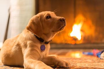 Labrador resting by a fireplace