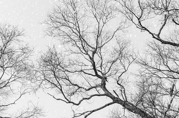 Branches Of The Trees