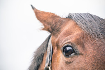 Cropped Image Of Brown Horse Against Sky