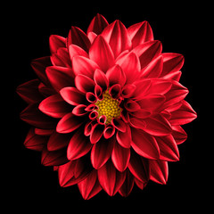 Poster Dahlia Surreal dark chrome red flower dahlia macro isolated on black