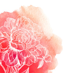 Vector white ink drawn peony on red watercolor background