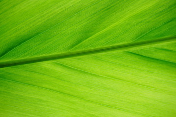 close up green leaf texture background, nature and ecology concept, can use as wallpaper