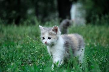 fluffy kitten play at city park