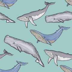 Whales seamless pattern vector