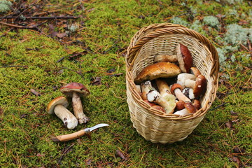 Корзина с грибами на зеленом мху в лесу.