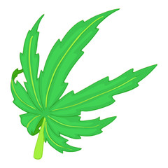 Cannabis leaf icon in cartoon style isolated on white background. Drug symbol vector illustration