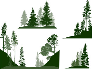 set of four green pines and firs trees compositions