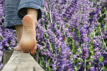 Türaufkleber Lavendel marche pieds nus - lavande