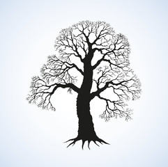 Vector image of mighty tree with bare branches
