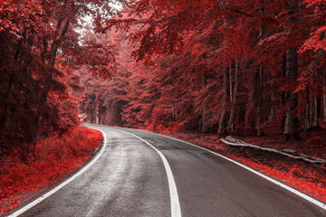 Autumn road through red leaves forest