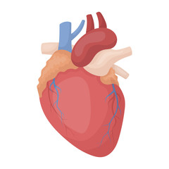 Heart icon in cartoon style isolated on white background. Organs symbol stock vector illustration.