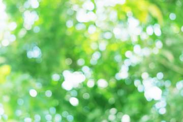 green nature light bokeh