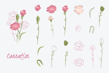 Greeting card Spring carnation flower