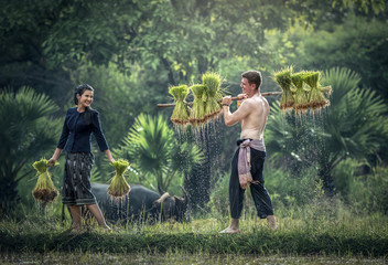 Couple farmer in Thailand; Them grow rice in the rainy season. They were soaked with water and mud to be prepared for planting. wait three months to harvest crops