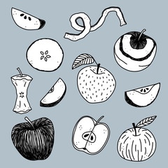 Hand drawn apple vector illustration