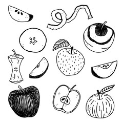 Hand drawn apple vector illustration