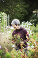 A mature woman in a flowering bed, cutting flowers for arrangements. An organic flower nursery.