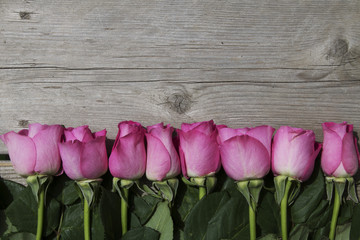 Line of Pink Roses on Wood Background