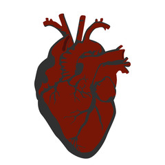 Human heart vector illustration.