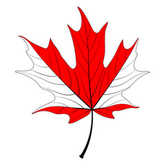 vector red maple leaf