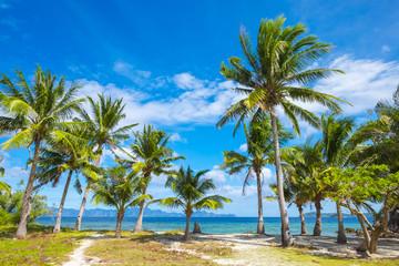 Palm trees and blue sky on Malcapuya Island, Philippines
