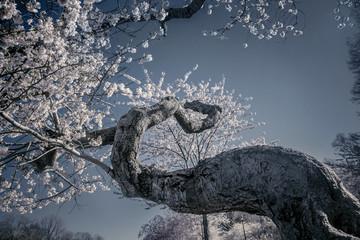 Twised Tree Bloom
